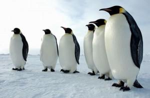 ペンギンアップデート3.0